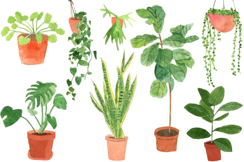 Plants and Influencers: Your Online Green Dream Team!